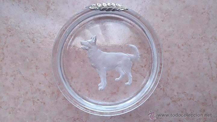 Antigüedades: Antiguo cenicero en cristal con grabado de pastor alemán y adorno en plata de ley repujada . - Foto 2 - 44763010