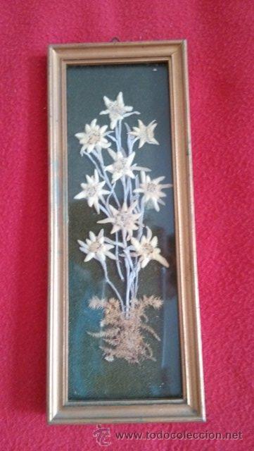 Cuadro con flores edelweiss originales comprar marcos antiguos de cuadros en todocoleccion - Marcos de cuadros originales ...