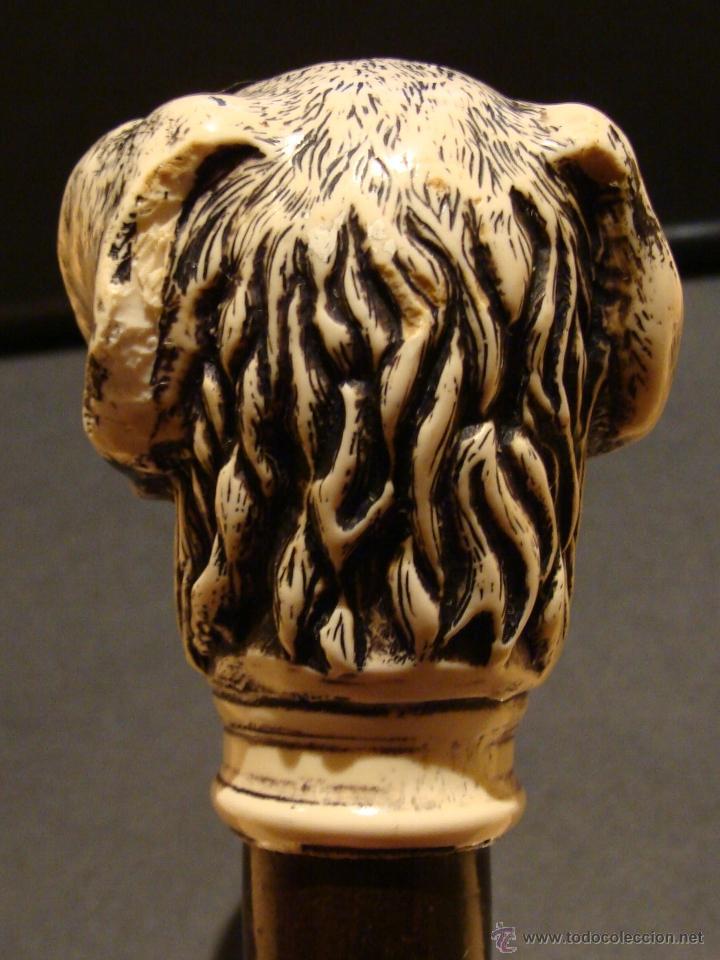 Antigüedades: EXCELENTE ANTIGUO BASTÓN DE COLECCIÓN CON EMPUÑADURA DE PERRO GALGO - Foto 11 - 114206202