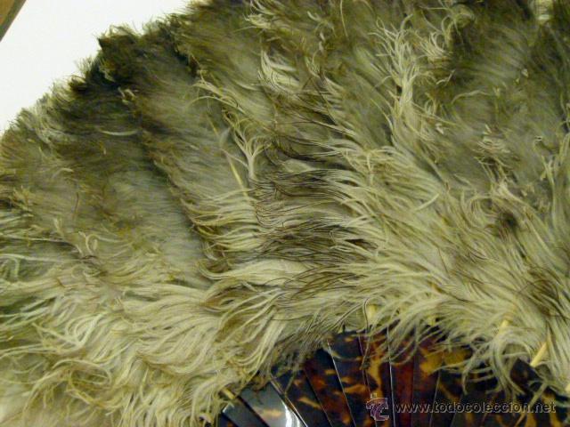 Antigüedades: Viejo Abanico de plumas de Marabu - Foto 2 - 50194999