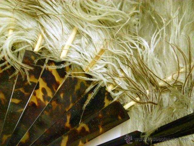 Antigüedades: Viejo Abanico de plumas de Marabu - Foto 4 - 50194999