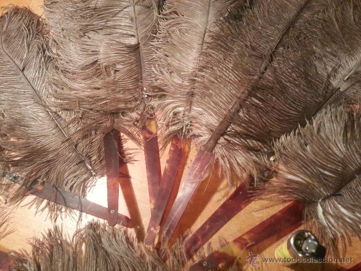 Antigüedades: plumas de marabu y carey , gran tamaño ,antiguas para restauracion abanico o pericon - leer - Foto 3 - 53034395