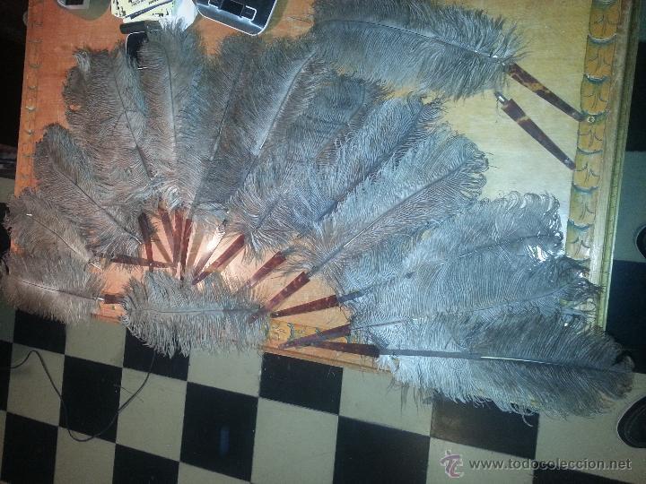 Antigüedades: plumas de marabu y carey , gran tamaño ,antiguas para restauracion abanico o pericon - leer - Foto 4 - 53034395