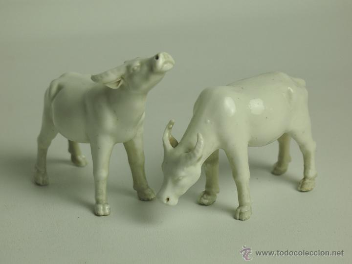 PAREJA DE VACAS. PORCELANA. BLANC DE CHINE. CHINA. SIGLO XIX-XX. (Antigüedades - Porcelanas y Cerámicas - China)