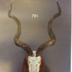 Antigüedades: KUDU AFRICANO. Lote 55993548