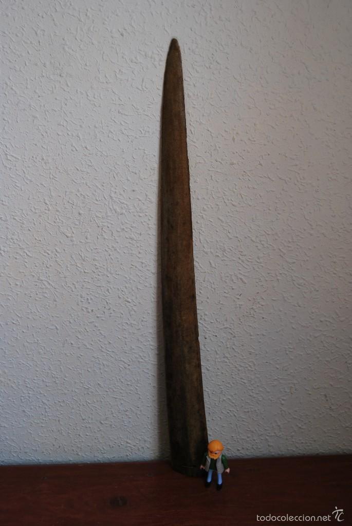 Antigüedades: ANTIGUO PICO DE PEZ ESPADA - TAXIDERMIA - PP. S.XX - 56 CM - Foto 2 - 223302328