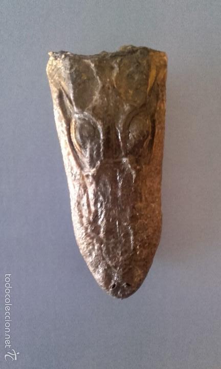 Antigüedades: CABEZA DE COCODRILO DISECADA - TAXIDERMIA AUTÉNTICA - Foto 4 - 213195051