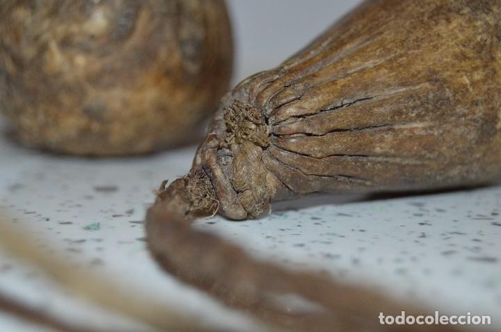 Antigüedades: Antiguo útil de caza, Piel y cuerda, similar a unas boleadoras. - Foto 4 - 61415819
