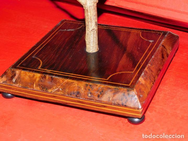 Antigüedades: PAREJA PAJAROS DISECADOS OROPENDOLA Y ESTORNINO 25 CMS PEANA ISABELINA, INCREIBLE MONTAJE Y ESTADO - Foto 10 - 63282576