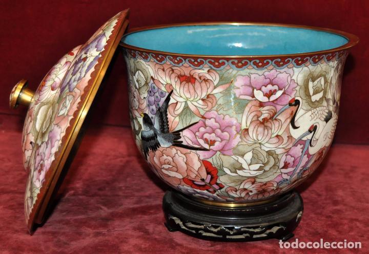 Antigüedades: BONITO POTICHE CHINO EN ESMALTE CLOISINNE (ROYAL PALACE) PRINCIPIOS SIGLO XX - Foto 3 - 64595319