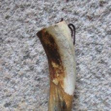 Antigüedades: ROBUSTA Y ANTIGUA COLODRA PARA PIZARRAS DE SEGADORES AL CINTURON - EN ASTA VACUNA 230GR + INFO. Lote 68170889