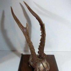 Antigüedades: ANTIGUA CORNAMENTA SOBRE BASE DE MADERA. Lote 69944497