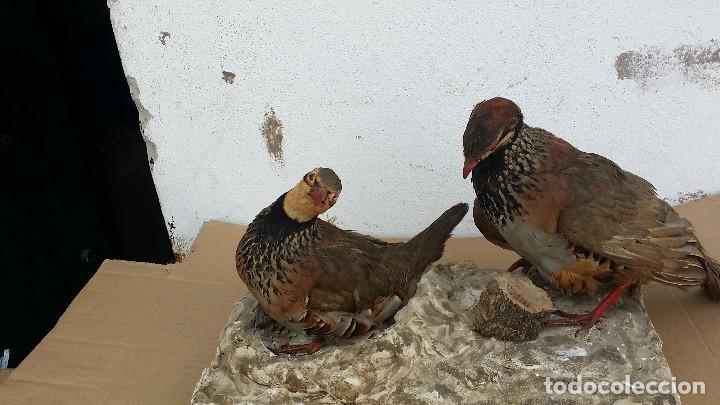 Antigüedades: parejas de perdices dicecados - Foto 4 - 77439101