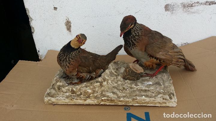 Antigüedades: parejas de perdices dicecados - Foto 5 - 77439101