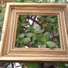 Antigüedades - precioso antiguo marco madera y estuco dorado 27 x 25 x 3,5 - 86630804