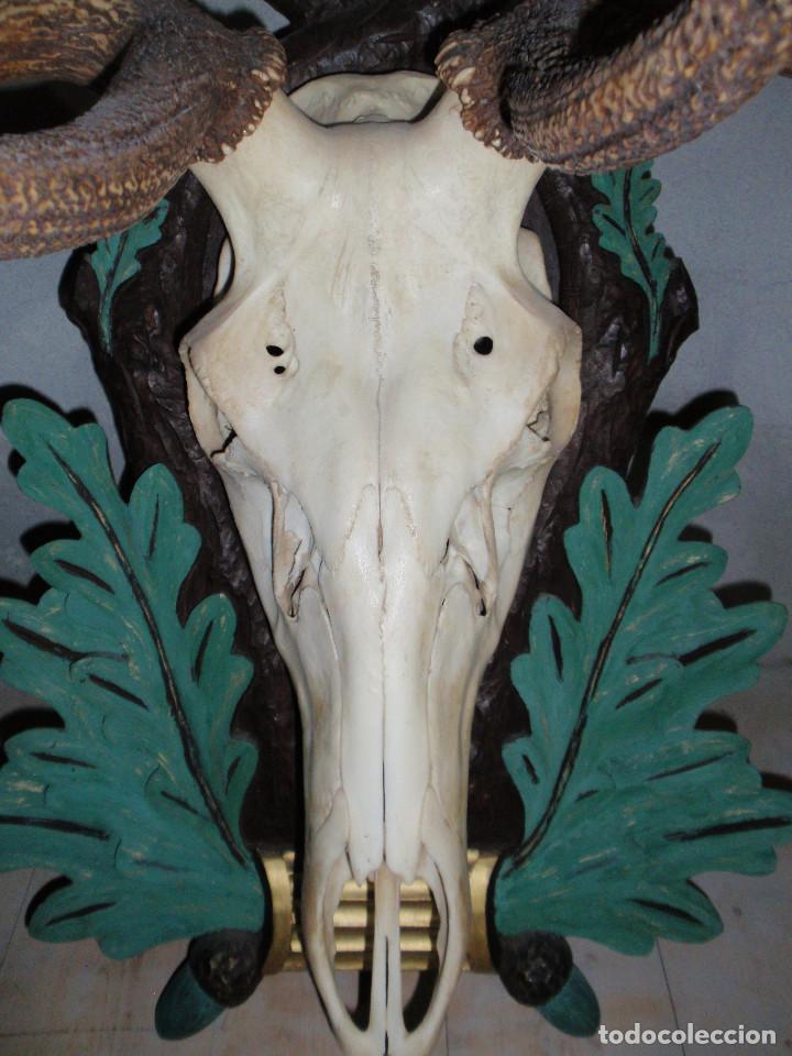 Antigüedades: CUERNA DE CIERVO MAGNIFICA HUESO - Foto 3 - 89863232