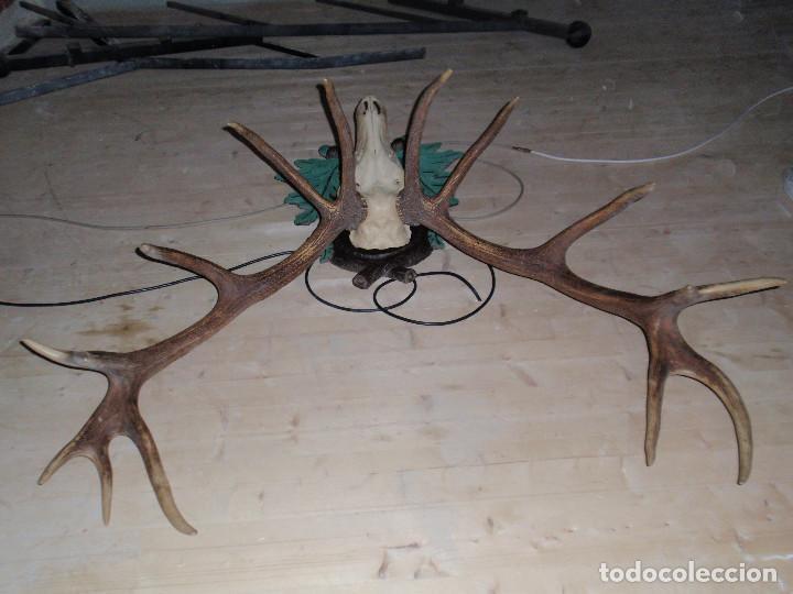Antigüedades: CUERNA DE CIERVO MAGNIFICA HUESO - Foto 5 - 89863232