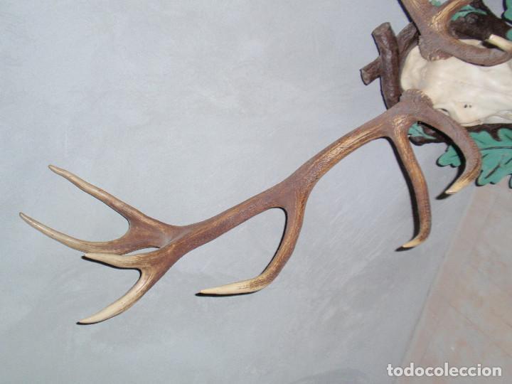 Antigüedades: CUERNA DE CIERVO MAGNIFICA HUESO - Foto 9 - 89863232