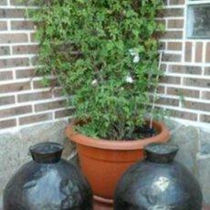 Antigüedades: PAREJA DE LECHERAS. Lote 97173375