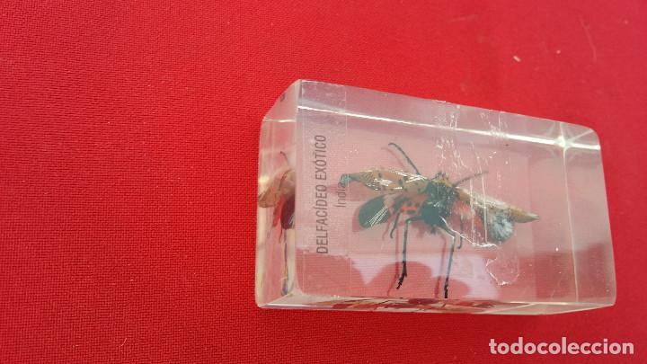 Antigüedades: insecto disecado - Foto 2 - 99288563