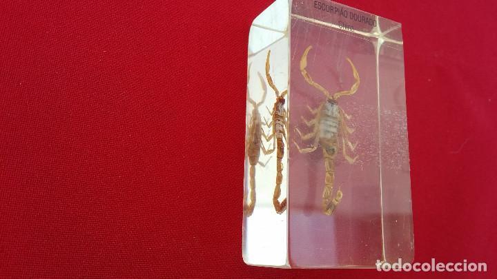 Antigüedades: insecto disecado - Foto 2 - 99289279