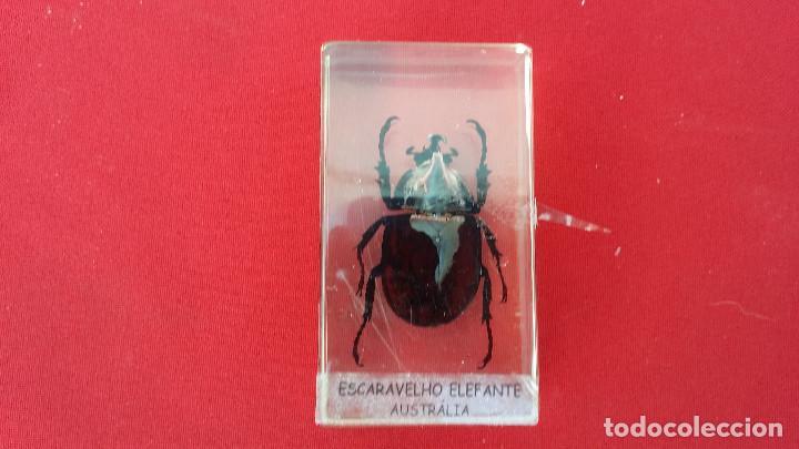 Antigüedades: insecto disecado - Foto 2 - 99289415