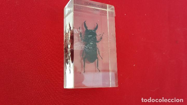 Antigüedades: insecto disecado - Foto 2 - 99289451