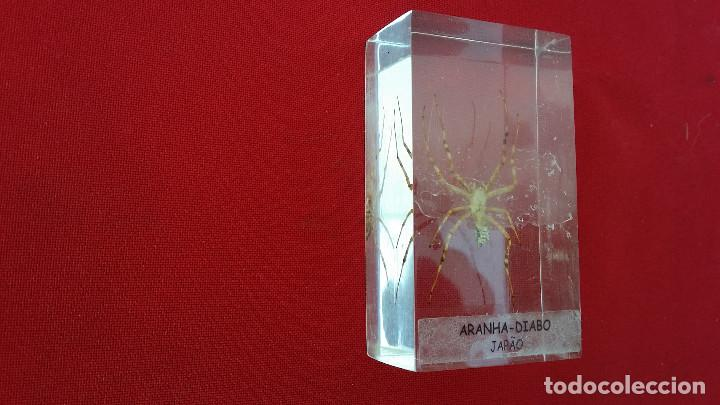 Antigüedades: insecto disecado - Foto 2 - 99289619