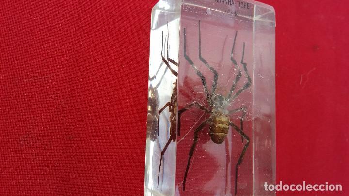 Antigüedades: insecto disecado - Foto 2 - 99289703