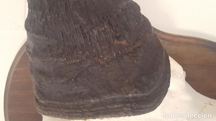 Antigüedades: gran búfalo cafre - Foto 4 - 106747795