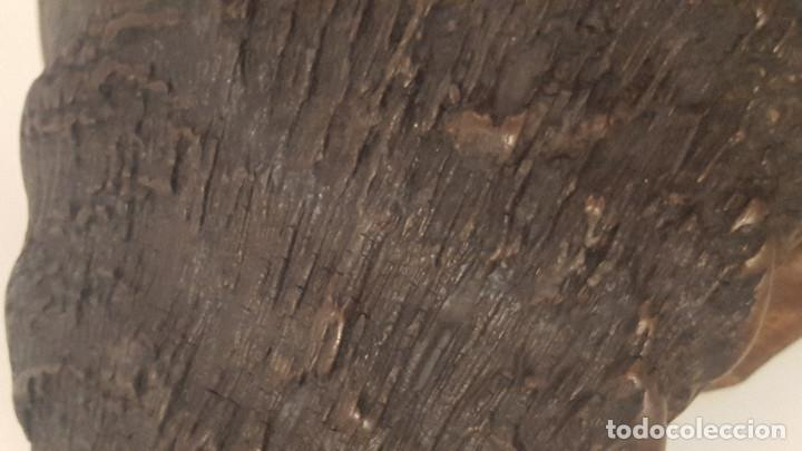 Antigüedades: gran búfalo cafre - Foto 6 - 106747795