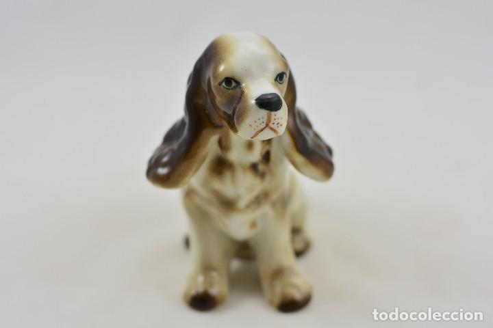 Antigüedades: Perro de porcelana. Cocker de caza - Foto 5 - 109141523
