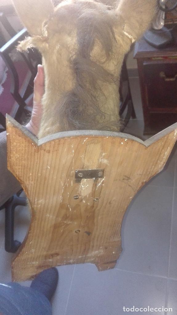 Antigüedades: espectacular cabeza de caballo disecada - Foto 6 - 112513999