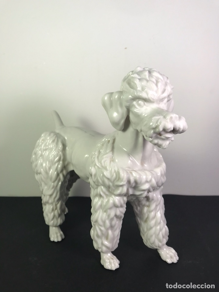 Antigüedades: Figura Porcelana- Perro Caniche- Algora- 16,0 cm - Foto 4 - 114097594