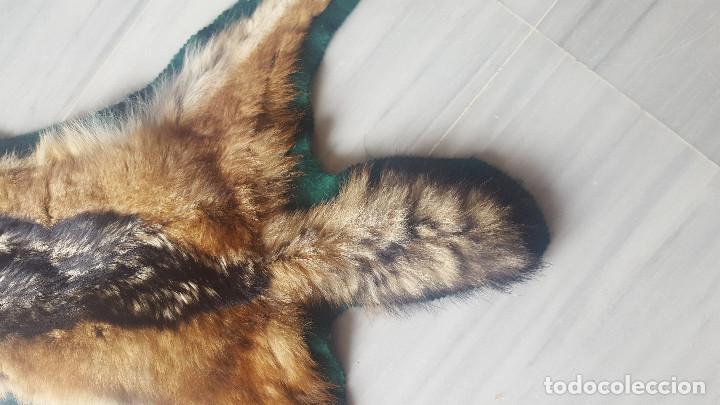 Antigüedades: preciosa piel de chacal negro - Foto 4 - 117025235