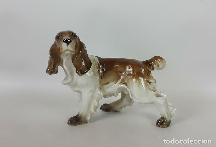 SPANIEL. PORCELANA HUTSCHENREUTHER GERMANY. CIRCA 1950. (Antigüedades - Porcelana y Cerámica - Alemana - Meissen)