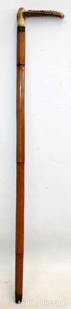 BASTON CON EMPUÑADURA DE ASTA Y CAÑA. CIRCA 1940 (Antigüedades - Moda - Bastones Antiguos)