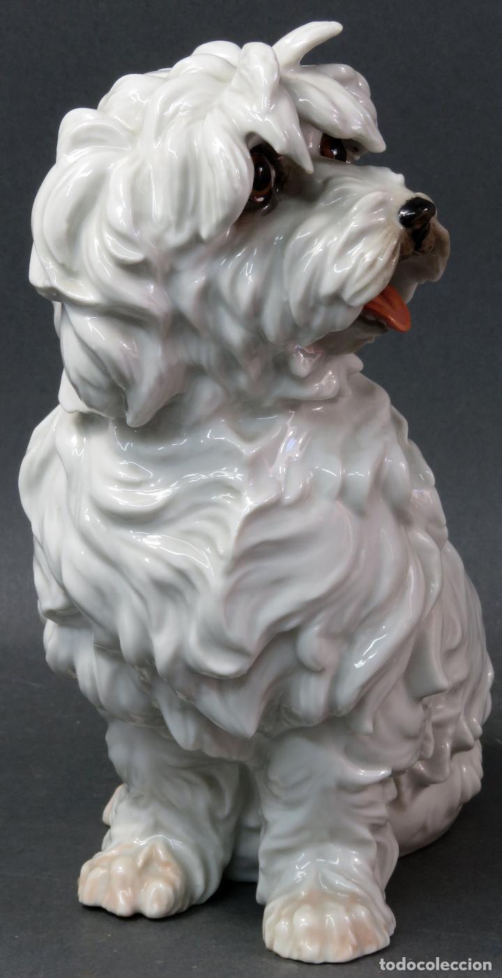 Antigüedades: Perro Terrier en porcelana blanca de Algora siglo XX - Foto 3 - 122671799