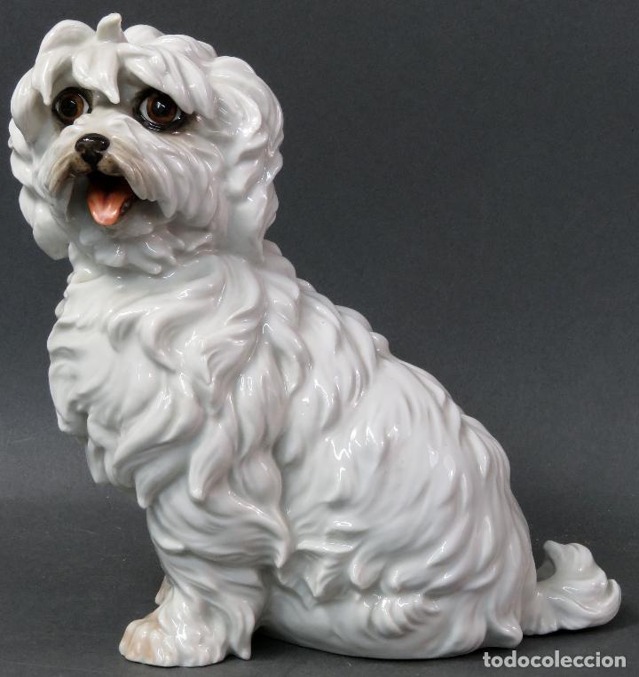 Antigüedades: Perro Terrier en porcelana blanca de Algora siglo XX - Foto 5 - 122671799