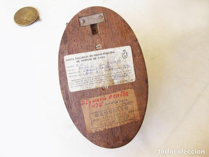 Antigüedades: CUERNA DE REBECO CON MEDALLA HOMOLOGACIÓN. COTO DE RERES. SIERRA DE LA GALLERA. BENEDITO 1972 - Foto 11 - 132260274