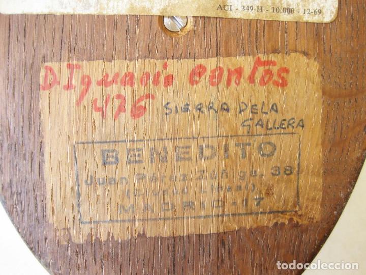 Antigüedades: CUERNA DE REBECO CON MEDALLA HOMOLOGACIÓN. COTO DE RERES. SIERRA DE LA GALLERA. BENEDITO 1972 - Foto 13 - 132260274