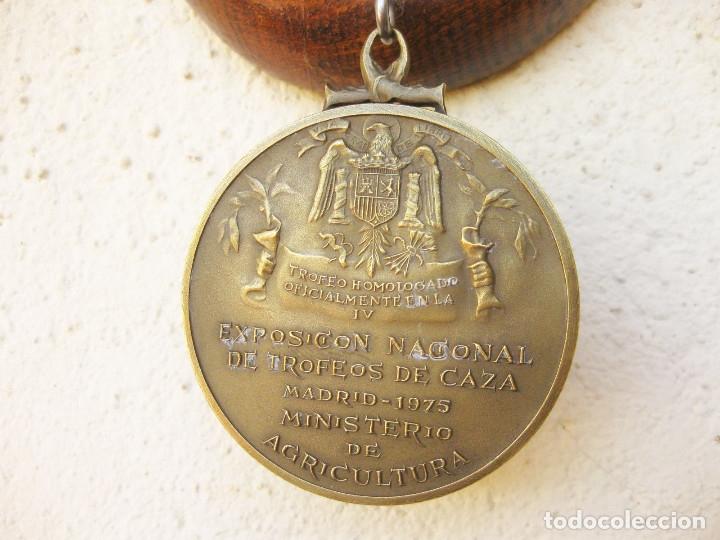 Antigüedades: CUERNA DE REBECO CON MEDALLA HOMOLOGACIÓN. COTO DE RERES. SIERRA DE LA GALLERA. BENEDITO 1972 - Foto 15 - 132260274