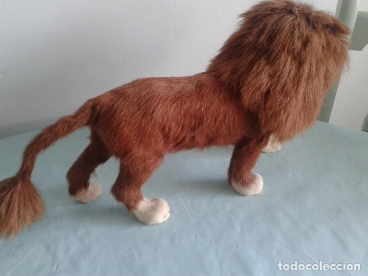 Antigüedades: antiguo Taxidermia en miniatura del león - Foto 3 - 132798906