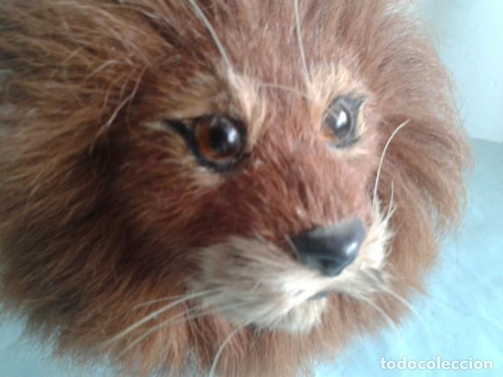 Antigüedades: antiguo Taxidermia en miniatura del león - Foto 7 - 132798906