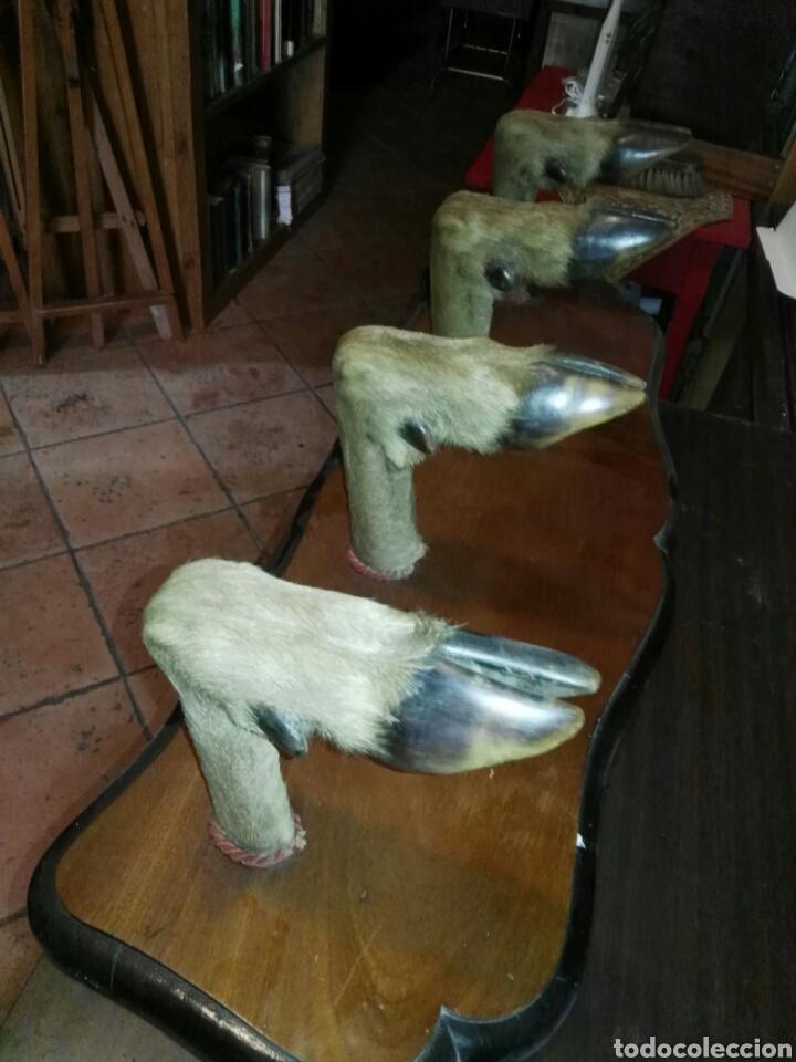 Antigüedades: Percha de cuatro patas ciervo - Foto 3 - 133041673