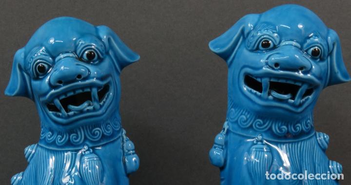 Antigüedades: Pareja Furias Foo cerámica vidriada azul China siglo XX - Foto 2 - 134303026