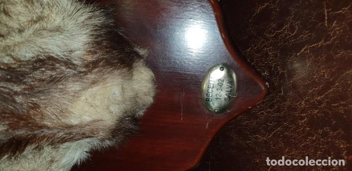 Antigüedades: Trofeo de caza cabra montesa - Foto 6 - 136436298