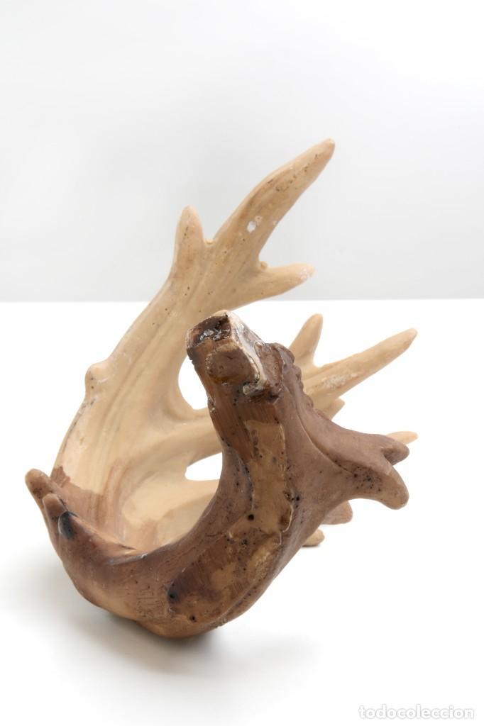 Antigüedades: Asta de ciervo, falsa taxidermia, cuernos animal, cuernos cervatillo, astas animal, decoración cazad - Foto 5 - 139435250