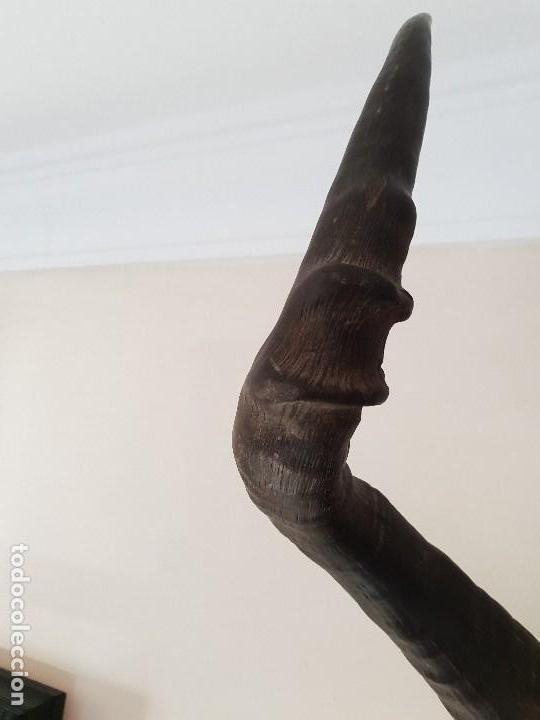 Antigüedades: Trofeo de antilope hartebeast rojo - Foto 2 - 139547242