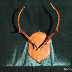 Antigüedades: TROFEO DE CAZA. Lote 142193186